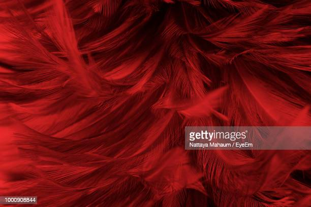 full frame shot of feathers - piuma foto e immagini stock
