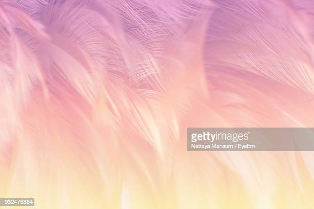 full frame shot of feathers - feather stock pictures, royalty-free photos & images