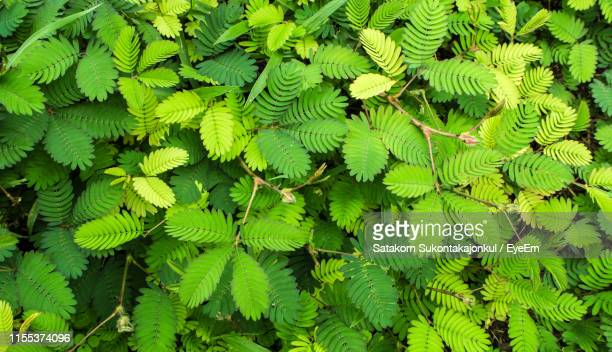 full frame shot of fern leaves - chanthaburi stock pictures, royalty-free photos & images
