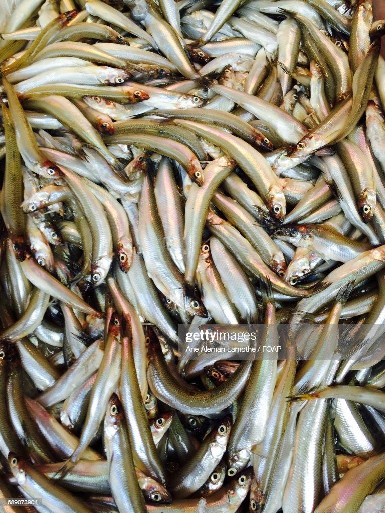 Full frame shot of fish : Stock Photo