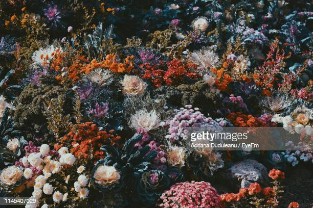 full frame shot of flowerbed - adriana duduleanu stock photos and pictures