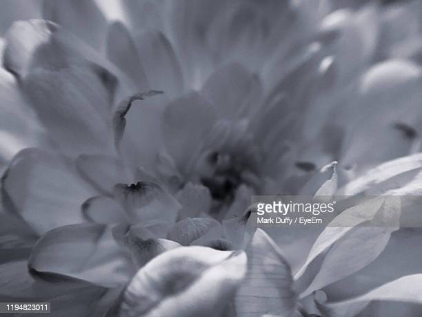 full frame shot of flowering plant - mark bloom stock pictures, royalty-free photos & images