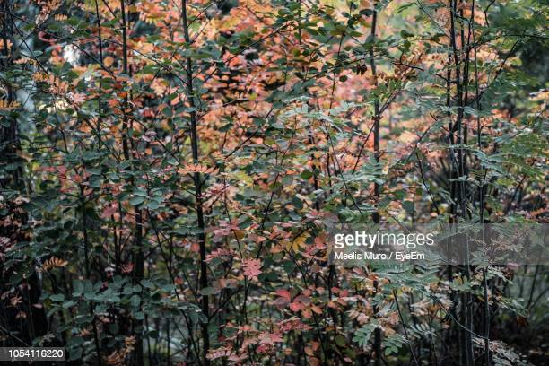 full frame shot of flowering plants and trees in forest - muro stock photos and pictures