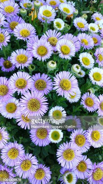 full frame shot of flowering plants - massimiliano ranauro stock pictures, royalty-free photos & images