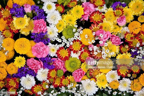 Full Frame Shot Of Flowers Blooming Outdoors