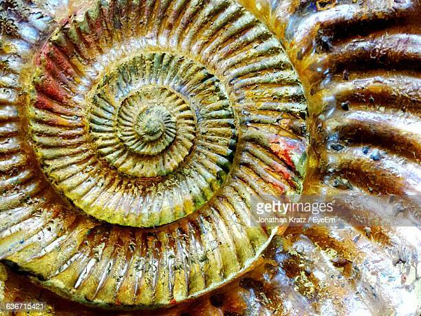 full frame shot of fossil - fossil stock pictures, royalty-free photos & images