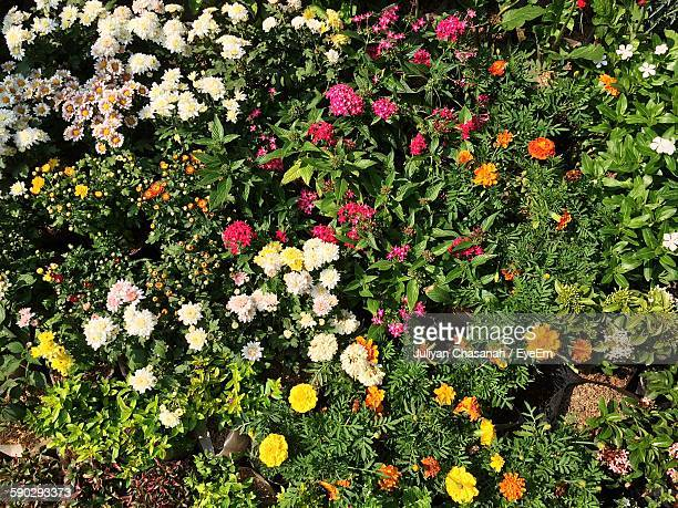 Full Frame Shot Of Fresh Flowers And Plants In Garden