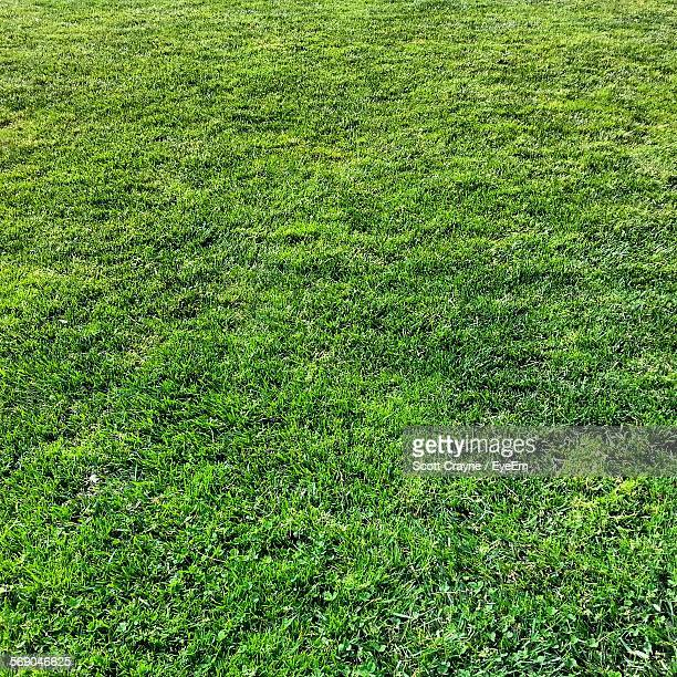 Full Frame Shot Of Fresh Green Grass