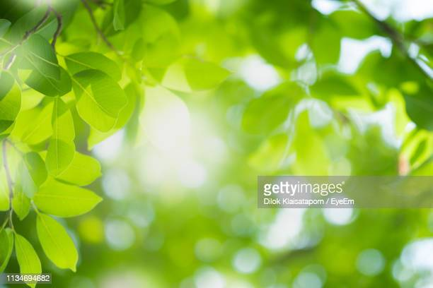 full frame shot of fresh green leaves - muted backgrounds stock pictures, royalty-free photos & images