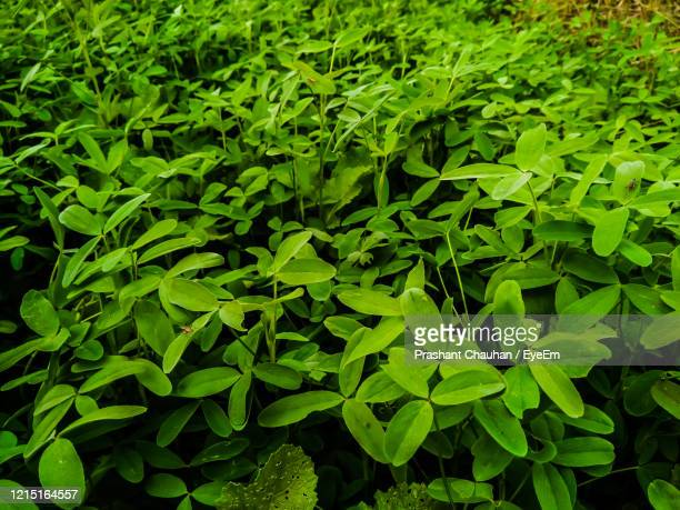 full frame shot of fresh green leaves - lush stock pictures, royalty-free photos & images