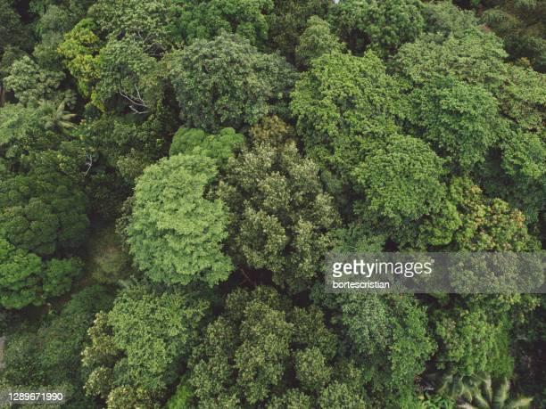 full frame shot of fresh green plants in forest - bortes fotografías e imágenes de stock