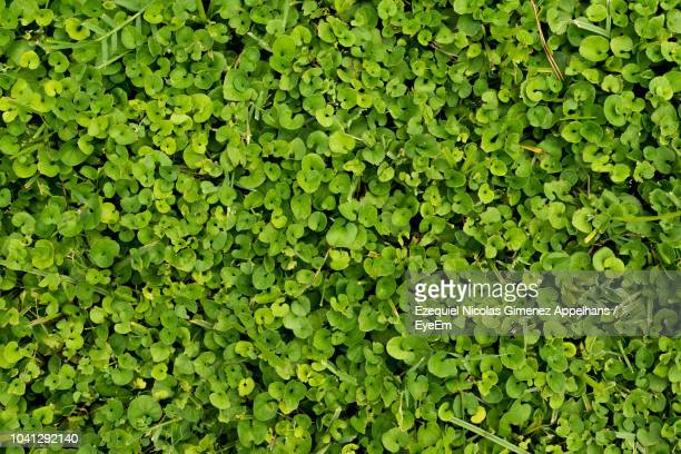 60 Top Shamrock Wallpaper Pictures Photos And Images