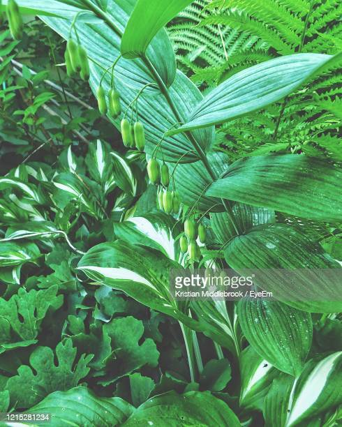 full frame shot of fresh green plants - reality fernsehen stock pictures, royalty-free photos & images