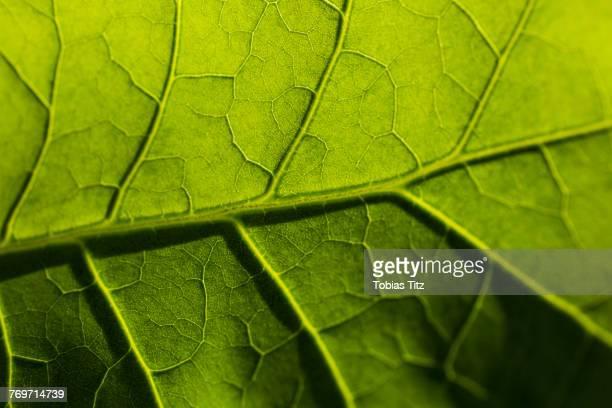 full frame shot of fresh leaf - bladnerf stockfoto's en -beelden