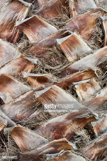 full frame shot of fronds of date trees - bark stock pictures, royalty-free photos & images