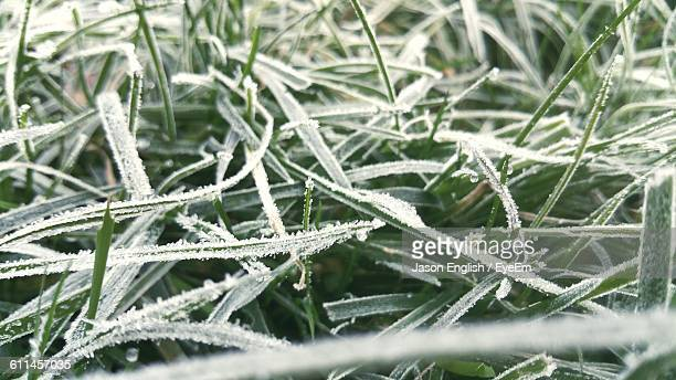 Full Frame Shot Of Frost On Grass