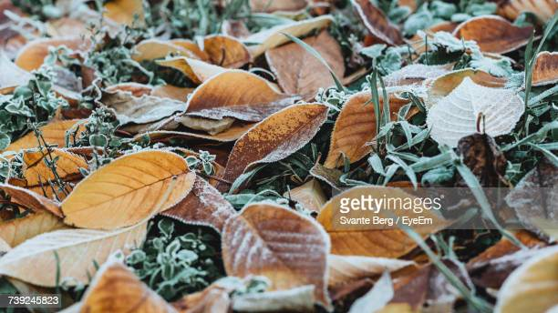 Full Frame Shot Of Frozen Leaves On Grass