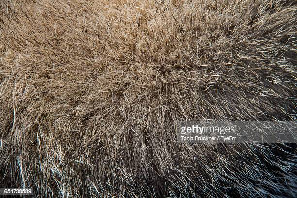 full frame shot of fur coat - fur coat stock pictures, royalty-free photos & images