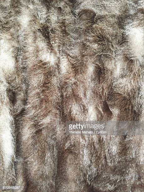Full Frame Shot Of Fur