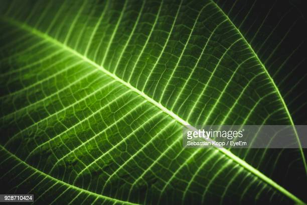 full frame shot of glowing leaf - photosynthesis stock photos and pictures