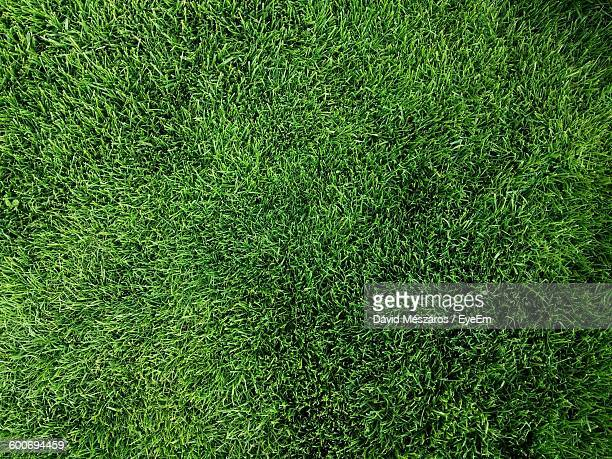 Full Frame Shot Of Grass Growing On Field