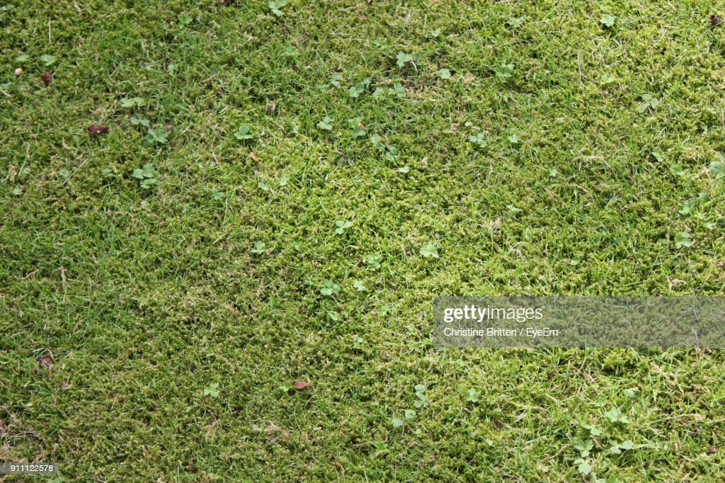 Full Frame Shot Of Grass On Field : Stock-Foto