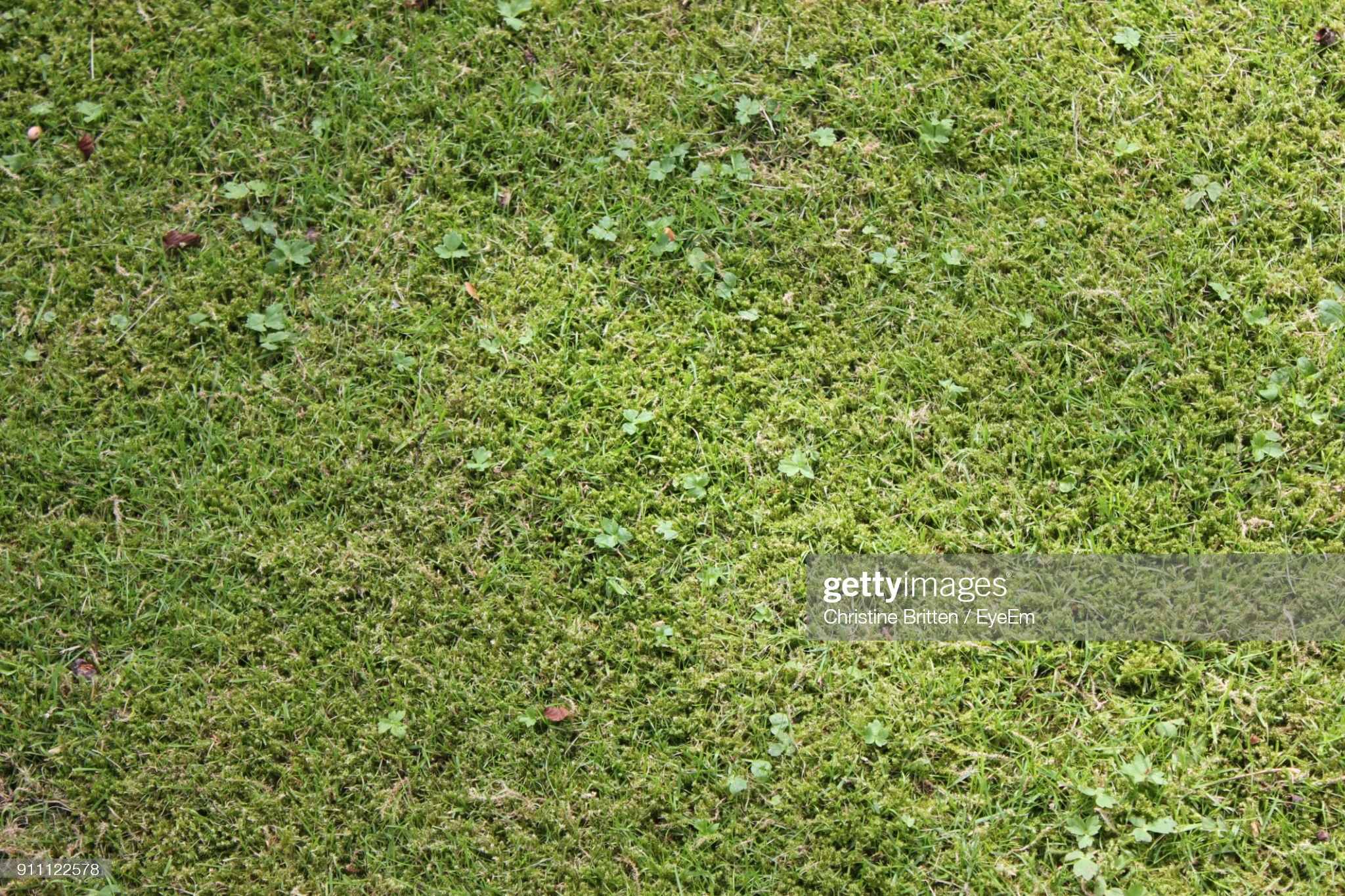 Mossy Grass Background by Christine aka stine1 on Getty Images
