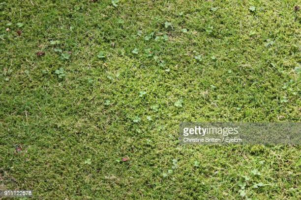 full frame shot of grass on field - moss stock pictures, royalty-free photos & images
