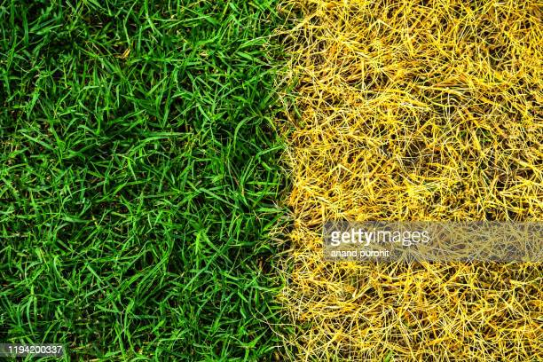 full frame shot of grass or lawn texture - football bulge stock pictures, royalty-free photos & images