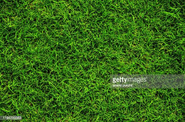 full frame shot of grass or lawn texture - gras stock pictures, royalty-free photos & images
