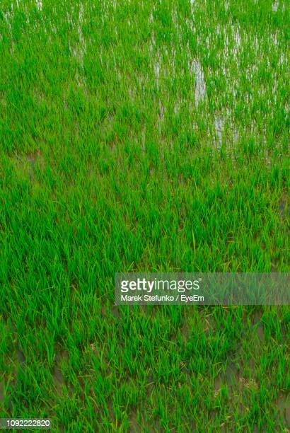 full frame shot of grassy field - marek stefunko stock photos and pictures