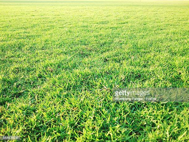 Grass Stock Photos and Pictures Getty Images