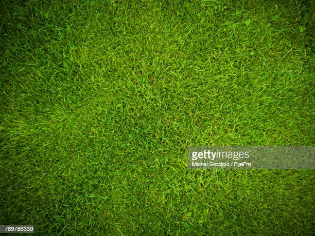 full frame shot of grassy field - pelouse photos et images de collection