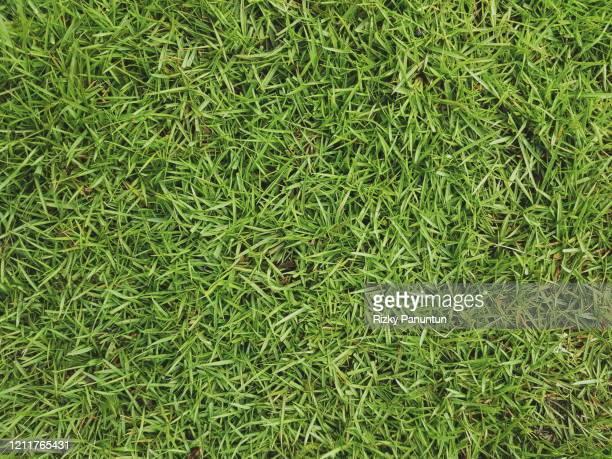 full frame shot of green grass - trefferversuch stock-fotos und bilder