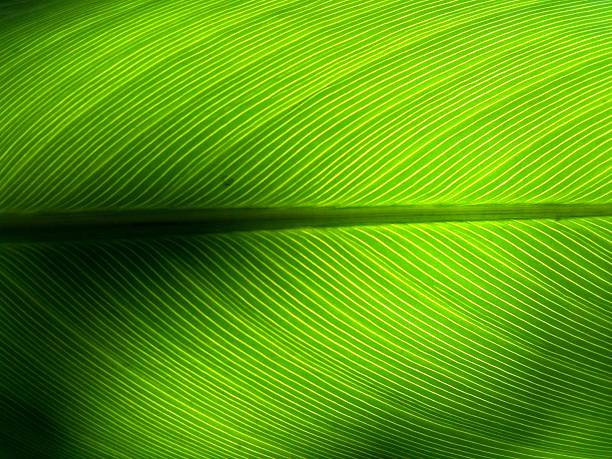 Full Frame Shot Of Green Leaf Wall Art