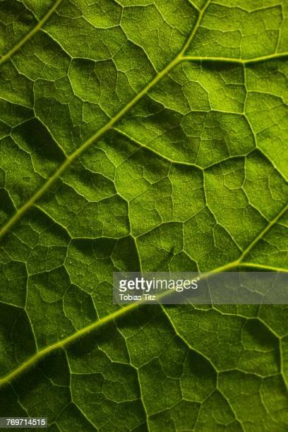 full frame shot of green leaf - macrofotografia foto e immagini stock