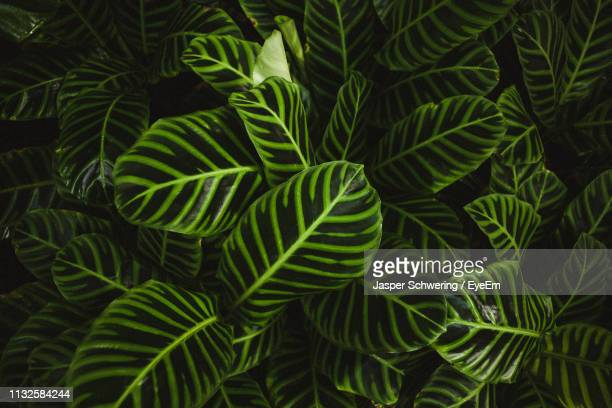 full frame shot of green leaves - botanical garden stock pictures, royalty-free photos & images