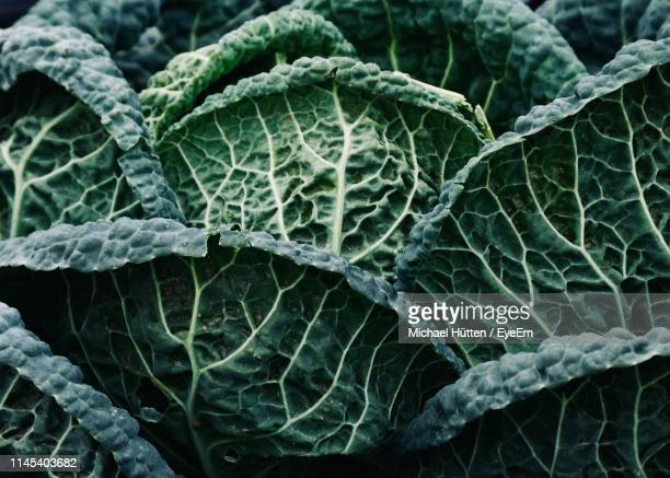 full frame shot of green leaves - kale stock pictures, royalty-free photos & images