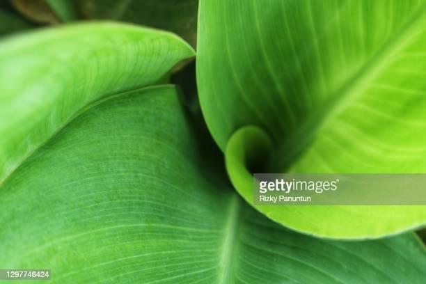 full frame shot of green leaves - trefferversuch stock-fotos und bilder