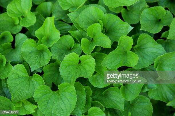 full frame shot of green plants - antonov stock pictures, royalty-free photos & images