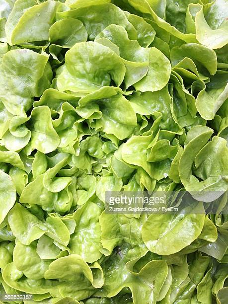 full frame shot of green salad - green salad stock pictures, royalty-free photos & images