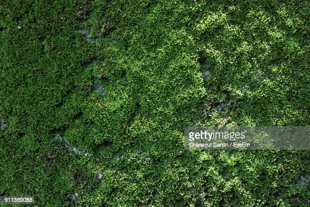 full frame shot of green tree - moss stock pictures, royalty-free photos & images