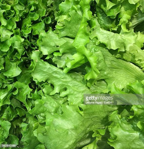 full frame shot of green vegetable salad - lettuce stock pictures, royalty-free photos & images
