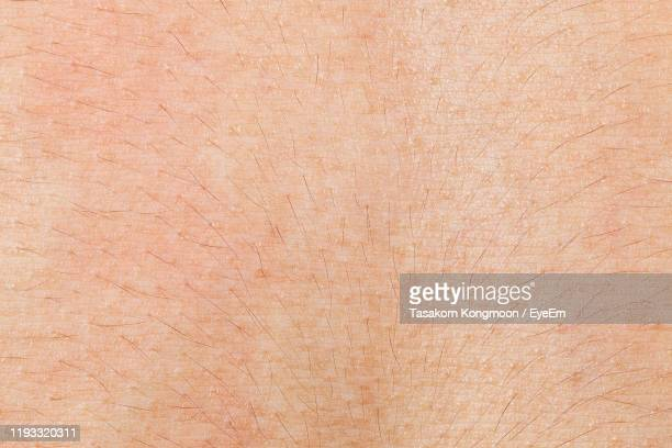 full frame shot of hair on skin - skin texture stock pictures, royalty-free photos & images