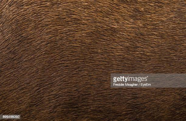full frame shot of horse hair - equestrian animal photos et images de collection
