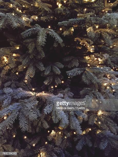 full frame shot of illuminated christmas tree - christmas tree stock pictures, royalty-free photos & images