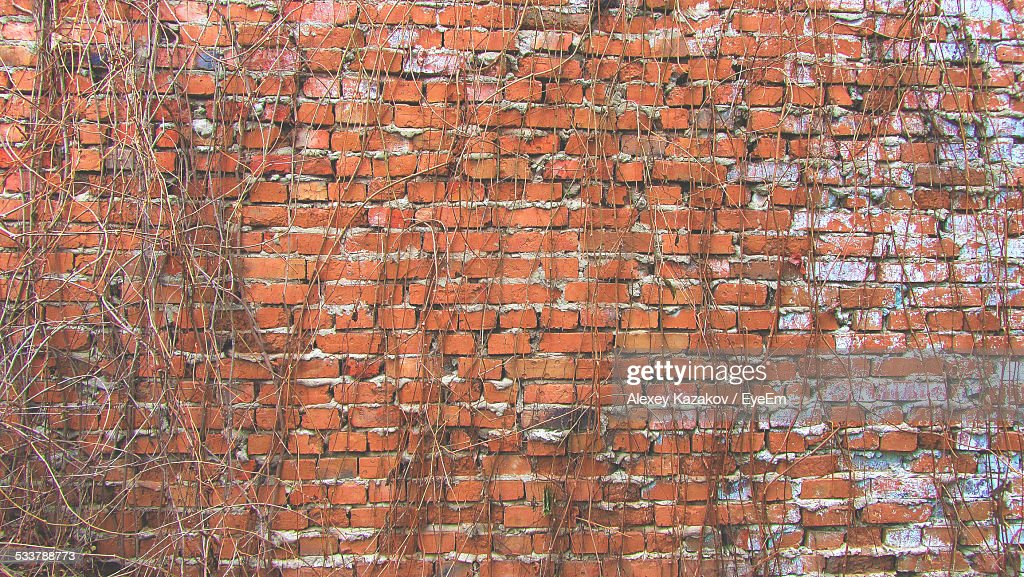 Full Frame Shot Of Ivy Against Brick Wall : Foto stock