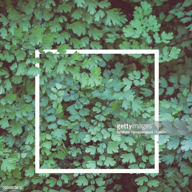 full frame shot of ivy growing on plant - flowering plant stock photos and pictures