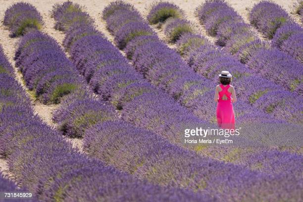 Full Frame Shot Of Lavender Flowers On Field