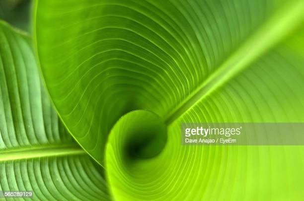 full frame shot of leaf - lush foliage stock pictures, royalty-free photos & images